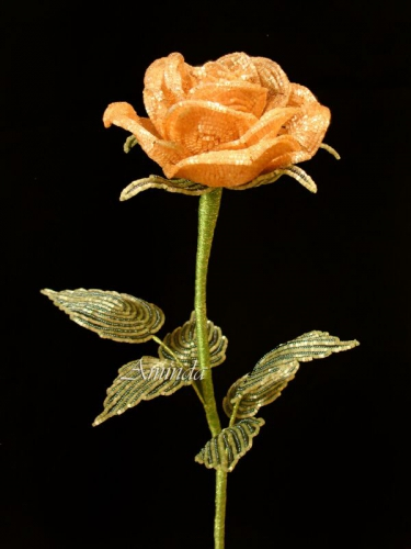 Роза карамельная