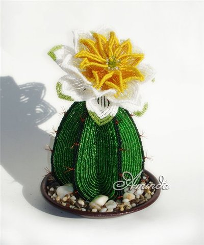Цветущий кактус