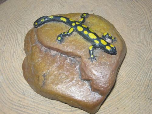Саламандра на камне
